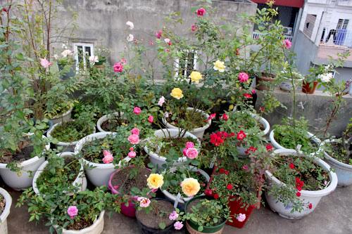 Triệu phú của trăm cây hoa đẹp - độc - lạ ở Hà Nội - 19