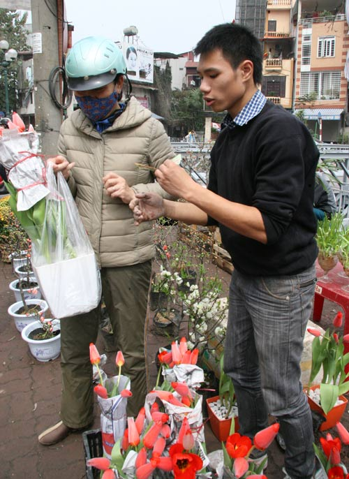 tulip viet gia 30 nghin hut nguoi mua - 3