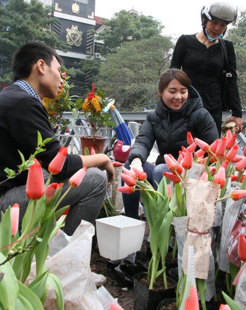 tulip viet gia 30 nghin hut nguoi mua - 4