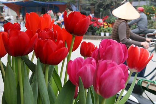 tulip viet gia 30 nghin hut nguoi mua - 7
