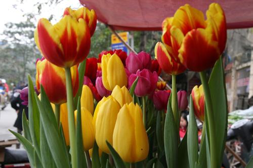 tulip viet gia 30 nghin hut nguoi mua - 8