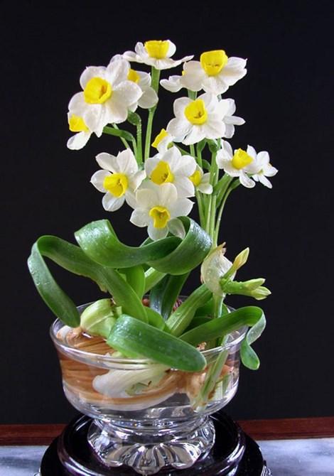 choi hoa thuy tien thu lai khung - 2