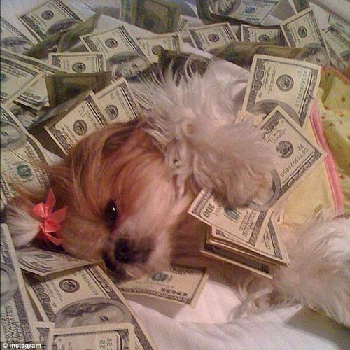 Cuộc sống sung sướng của những chú chó nhà giàu-1
