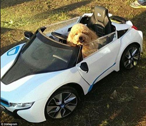 Cuộc sống sung sướng của những chú chó nhà giàu-10