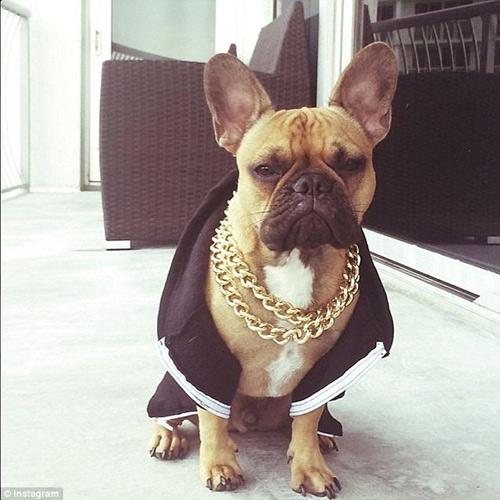 Cuộc sống sung sướng của những chú chó nhà giàu-11