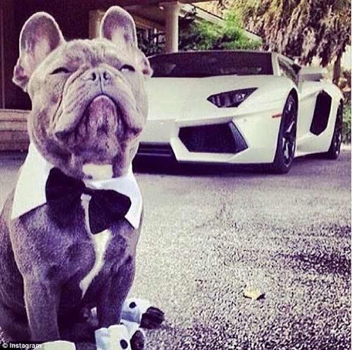 Cuộc sống sung sướng của những chú chó nhà giàu-2