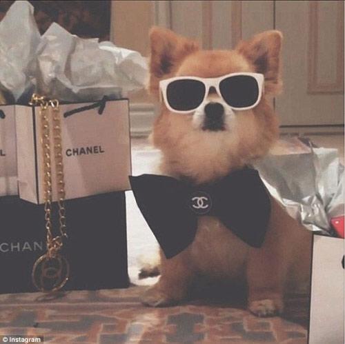 Cuộc sống sung sướng của những chú chó nhà giàu-4