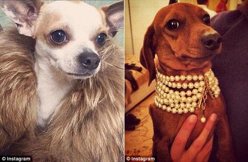 Cuộc sống sung sướng của những chú chó nhà giàu-5