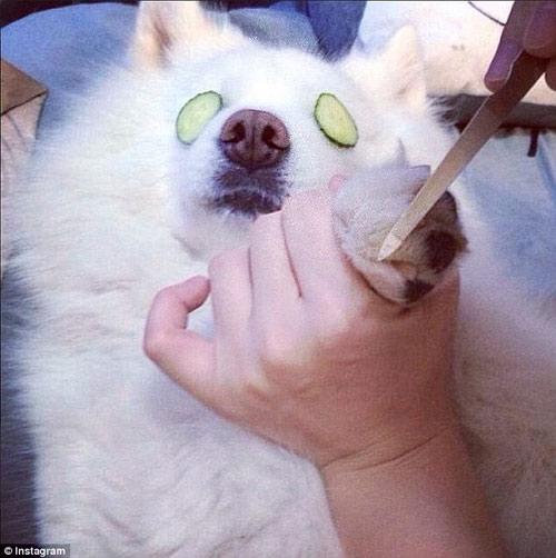 Cuộc sống sung sướng của những chú chó nhà giàu-6