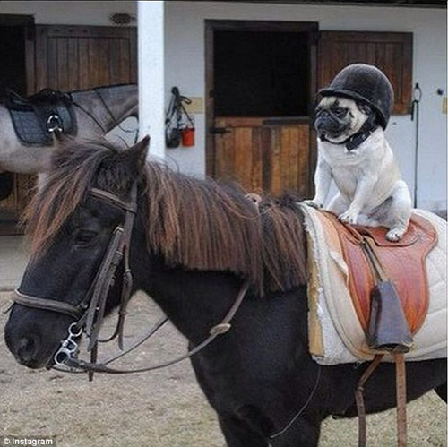 Cuộc sống sung sướng của những chú chó nhà giàu-8