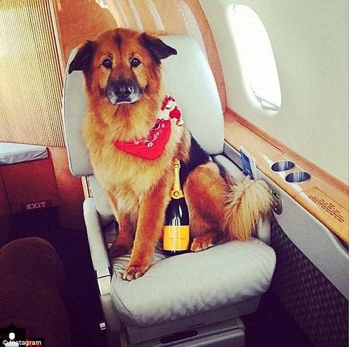 Cuộc sống sung sướng của những chú chó nhà giàu-9