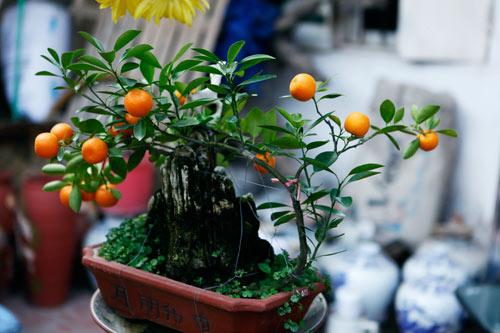 """diem mat"" nhung cay canh bonsai hut tien dip tet at mui - 5"
