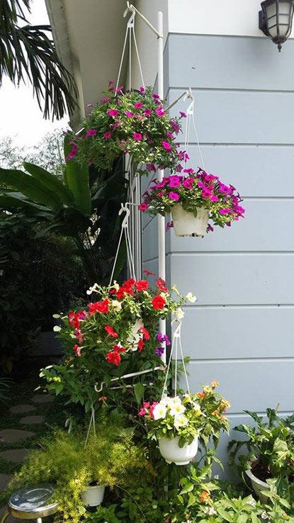ngam vuon hoa tuyet dep cua nu giang vien o tphcm - 4