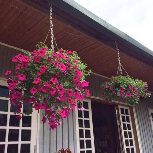 Vườn hồng đẹp như tranh của cô giáo Hà Giang - 21