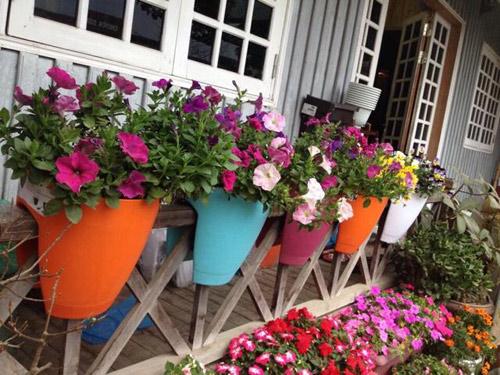 Vườn hồng đẹp như tranh của cô giáo Hà Giang - 22