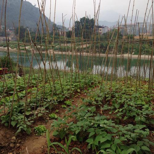 Vườn hồng đẹp như tranh của cô giáo Hà Giang - 30