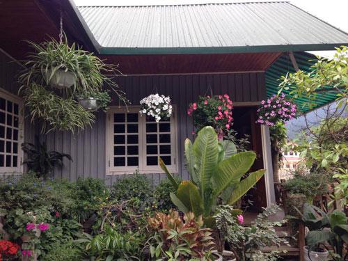 Vườn hồng đẹp như tranh của cô giáo Hà Giang - 19