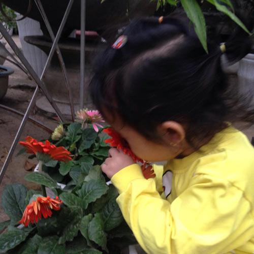 Vườn hồng đẹp như tranh của cô giáo Hà Giang - 29