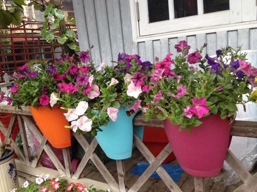 Vườn hồng đẹp như tranh của cô giáo Hà Giang - 23