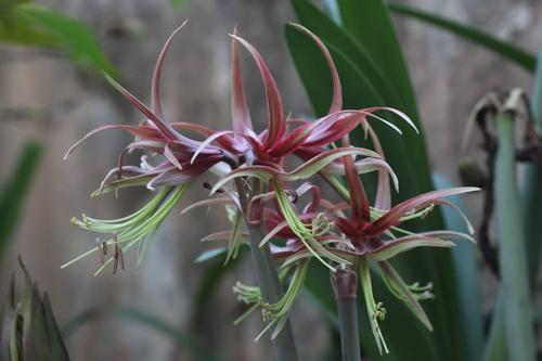trong hoa lan hue thom ngat me ly - 12