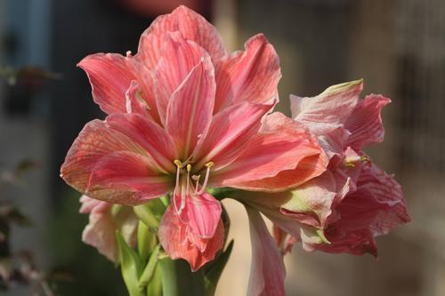 trong hoa lan hue thom ngat me ly - 5
