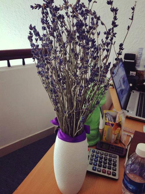 Hoa oải hương sốt xình xịch nhân ngày chị em - 10