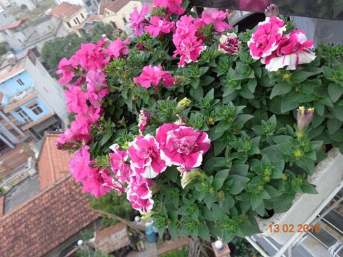 tinh yeu 'an hoa, ngu cung hoa' cua co giao quang ninh - 10
