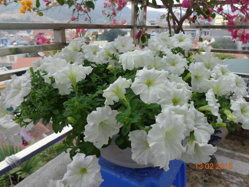 tinh yeu 'an hoa, ngu cung hoa' cua co giao quang ninh - 6