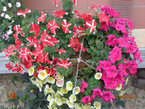 tinh yeu 'an hoa, ngu cung hoa' cua co giao quang ninh - 7