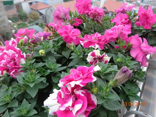 tinh yeu 'an hoa, ngu cung hoa' cua co giao quang ninh - 11