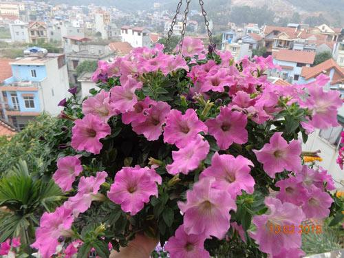 tinh yeu 'an hoa, ngu cung hoa' cua co giao quang ninh - 9
