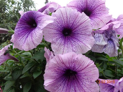 tinh yeu 'an hoa, ngu cung hoa' cua co giao quang ninh - 5