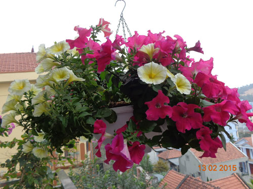 tinh yeu 'an hoa, ngu cung hoa' cua co giao quang ninh - 8