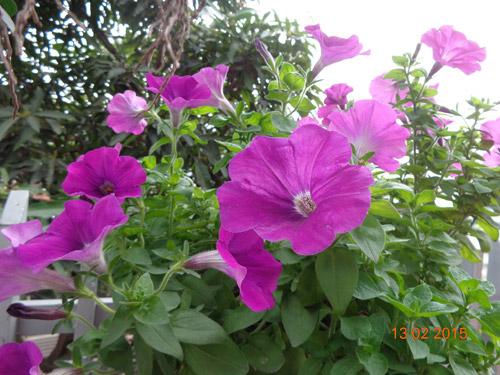 tinh yeu 'an hoa, ngu cung hoa' cua co giao quang ninh - 4