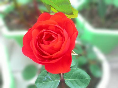 vuon hoa ban cong co gai nho trong tang me da khuat - 6