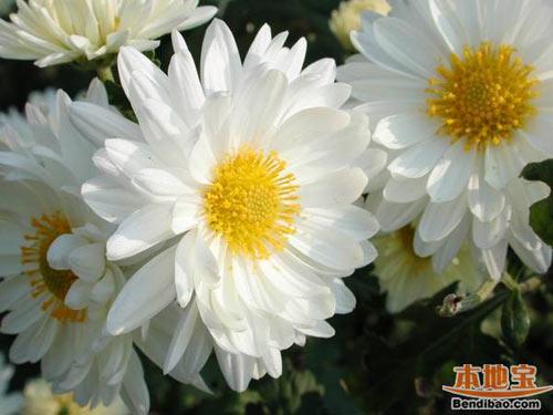 chon hoa tao mo khong pham cam ki tam linh - 1