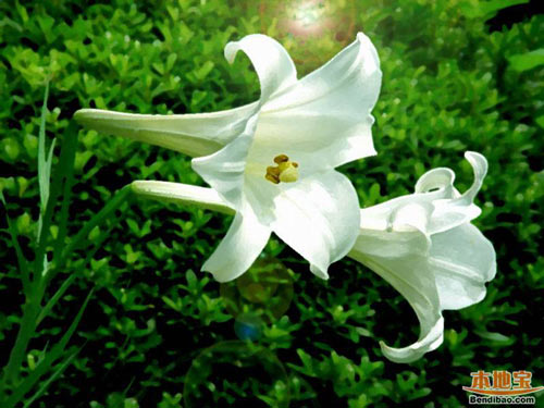 chon hoa tao mo khong pham cam ki tam linh - 3