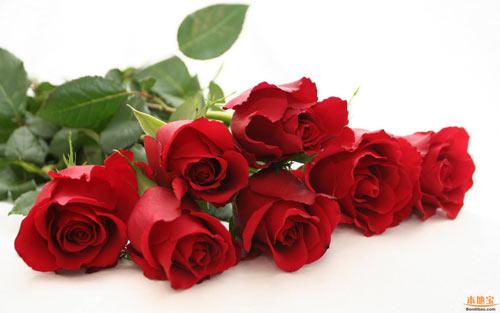 chon hoa tao mo khong pham cam ki tam linh - 4