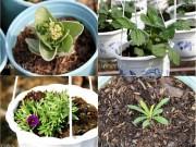 Nhà đẹp - Nhiều giống hoa mới lạ hứa hẹn đắt hàng dịp Tết
