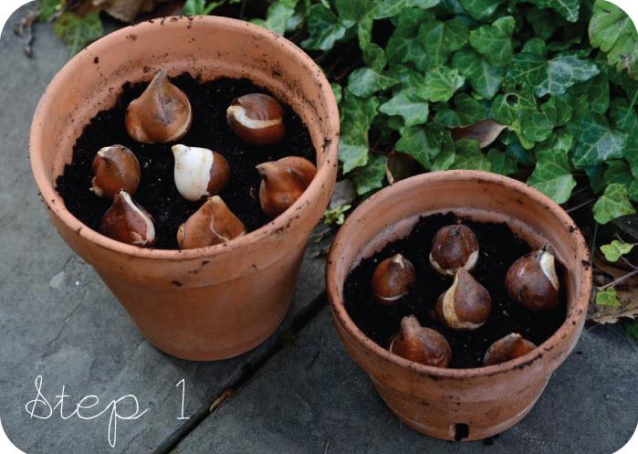 chi em cong so ron rang mua cu giong tulip, tien ong - 4