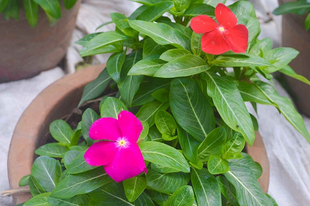 nguòi trong hoa tp.hcm tat bat chuan bi cho tet nguyen dan - 3