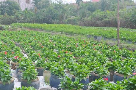 Người trồng hoa TP.HCM tất bật chuẩn bị cho Tết Nguyên đán-8