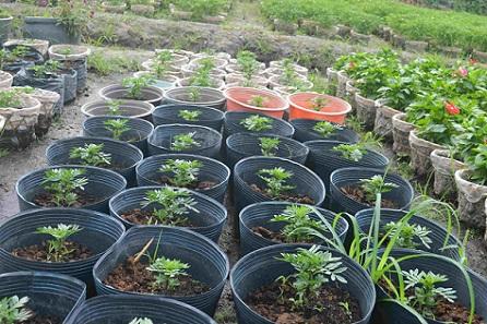 Người trồng hoa TP.HCM tất bật chuẩn bị cho Tết Nguyên đán-9