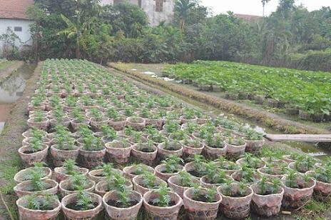 Người trồng hoa TP.HCM tất bật chuẩn bị cho Tết Nguyên đán-12