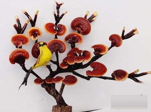 dan tinh lung suc mua nam linh chi bonsai tien trieu - 14