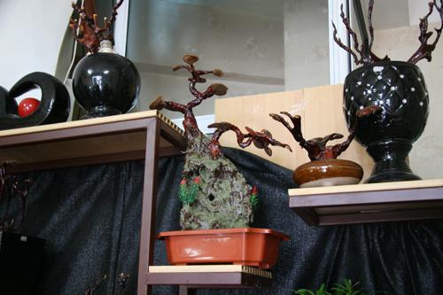 dan tinh lung suc mua nam linh chi bonsai tien trieu - 6