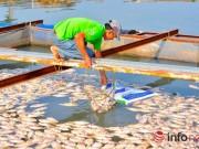 Tin trong nước - Đồng Nai: Cá chết kín sông, dân xót xa bán 2.000đồng/kg