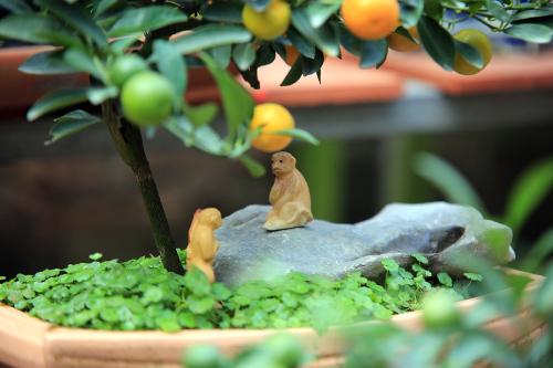 quat the mini gia 'dai gia' hut khach dip tet nguyen dan 2016 - 12