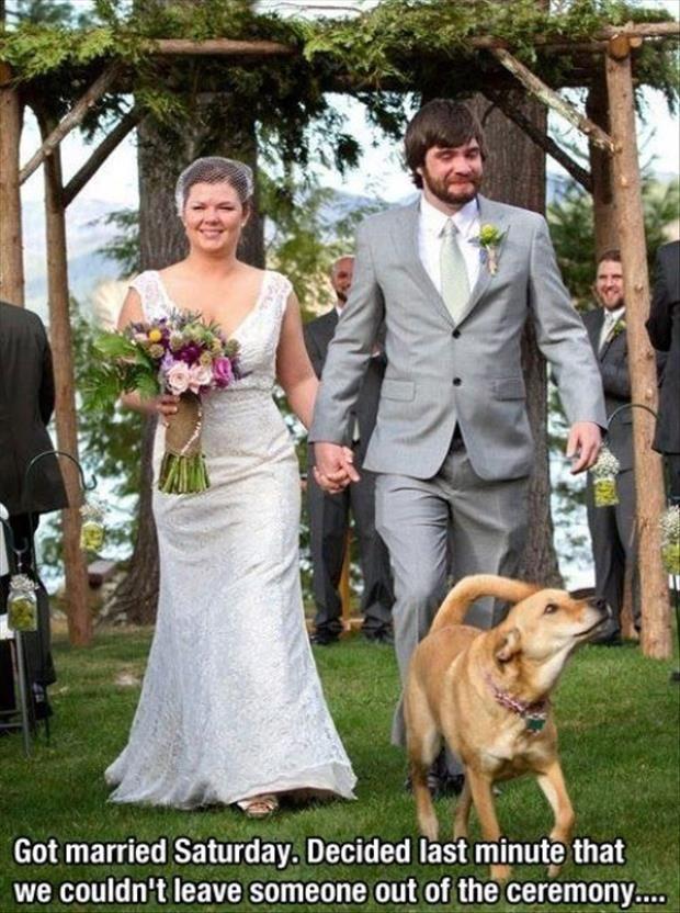 Loạt ảnh cưới khiến