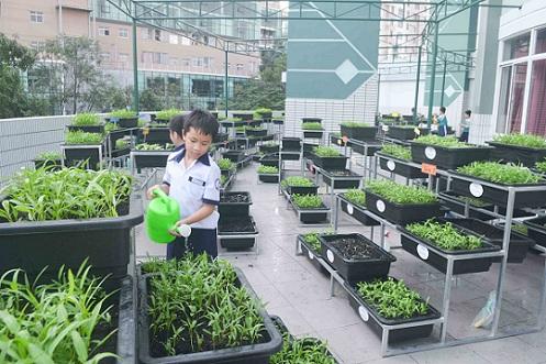 Bé trường tiểu học trồng rau sạch bán cho phụ huynh-4